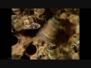 BBC Уроки выживания (05). Ориентирование (Познавательный, природа, животные, 1990)