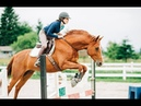 What Makes a Great Horse 5 years with Milo
