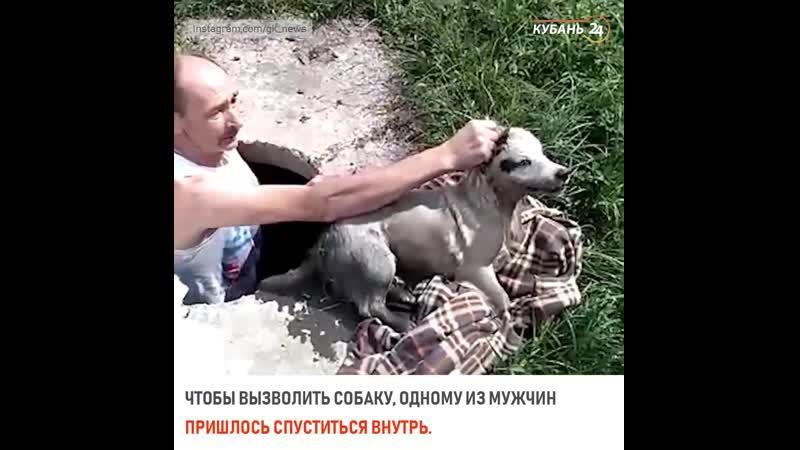 Спасение собаки в Горячем Ключе