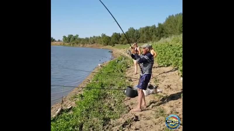 Сом на донку река Урал август 2019г