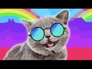 Смешные коты | Подборка за неделю #5 | Котопятница