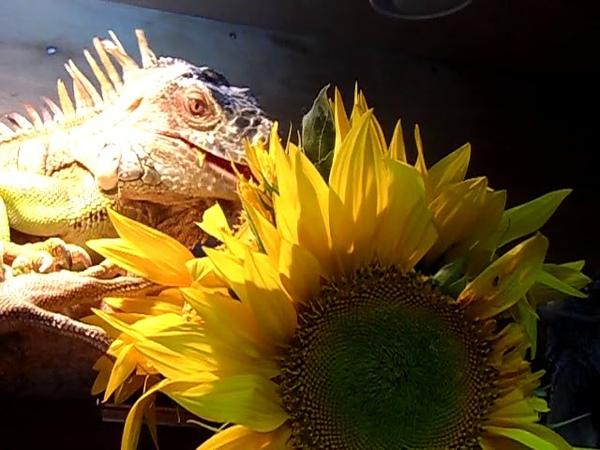 упражнений поможет дракон дарит цветы фото карте онлайн отмечено