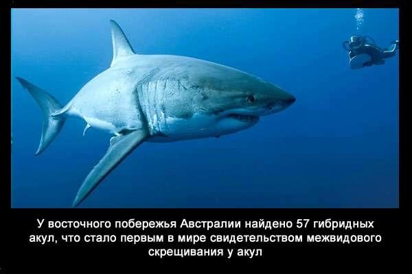 Valteya - Интересные факты о акулах / Хищники морей.(Видео. Фото) - Страница 2 8cYEeLsaSgI