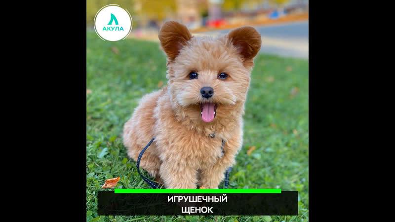 Игрушечный щенок   АКУЛА