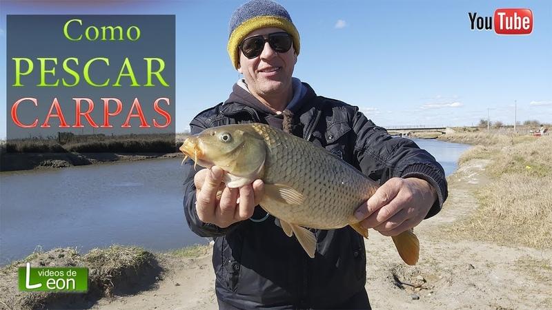COMO PESCAR CARPAS PESCA DE CARPAS en Del Carril Puente Blanco Carpfishing