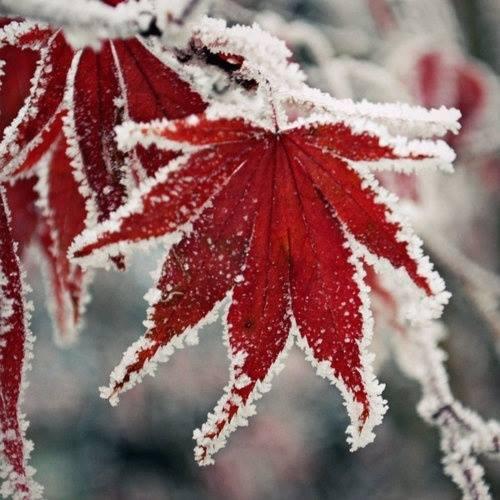 Зима у порога У порога зимушка - зима нам готовит снежную порошу. Велика морозная сума, только нет с ней Дедушки Мороза. Он придёт как раз под Новый год, одарит волшебными дарами. Закружится