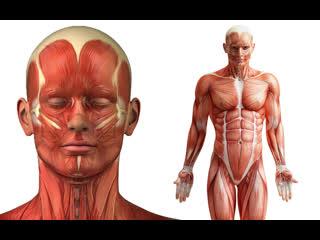 На экзамене по анатомии
