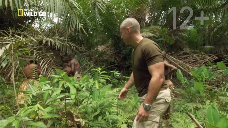 В поисках племен охотников National Geographic. Cерия 1. Острозубые кочевники