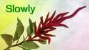 ABC TV How To Make Burgundy Amaranth Flower Slowly Craft Tutorial