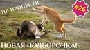 Приколы про животных. Смешное видео про котов, собак и не только. Выпуск 26