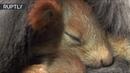 Чужих детей не бывает в Крыму кошка усыновила бельчат