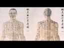 Семинар к.м.н. Зайцева С.В. Селезенка в традиционной китайской медицине