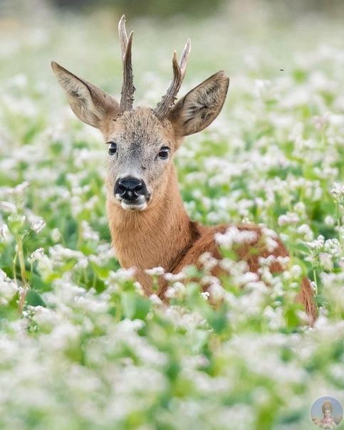 Милые животные в фотографиях Dic van Duijn