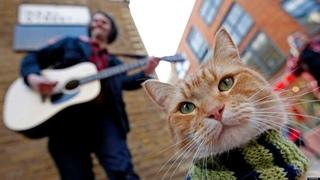 уличный кот по клике боб (2016)