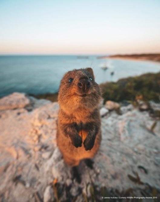 Финалисты конкурса Comedy Wildlife Photography Awards: самые забавные фотки из мира дикой природы за 2019 год