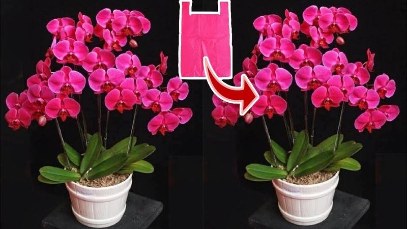 DIY Cara Membuat Bunga Anggrek dari Plastik Kresek How to make Orchid flower from plastic bag