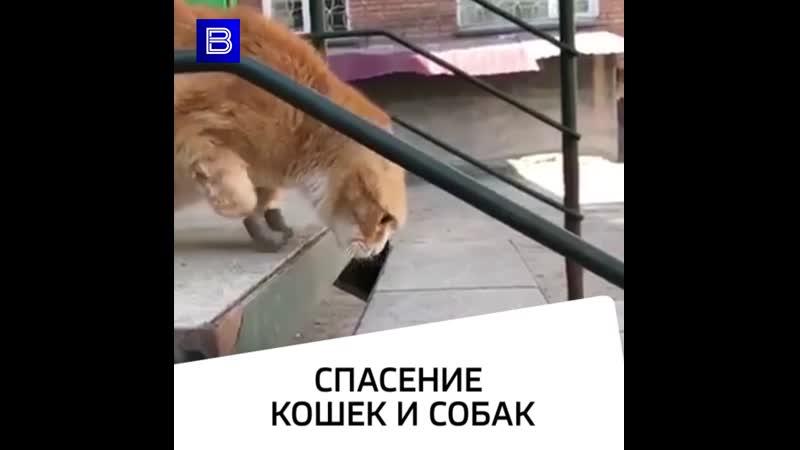 Спасение кошек и собак