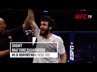 UFC Fight Night 163. Забит vs Кэттер.