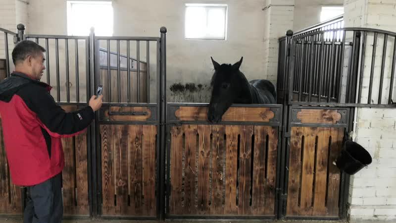 Лошадка открывает калитку mp4
