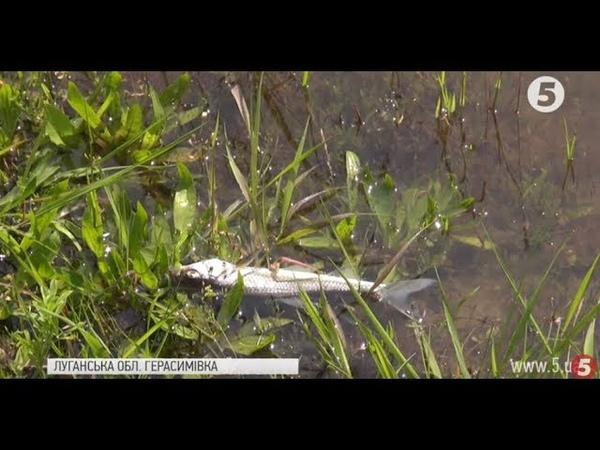 Спасибі Росії у річці на Луганщині загинула вся риба місцеві звинувачують завод в РФ