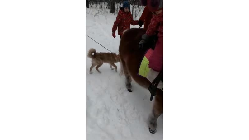 Собака и другие животные в городе