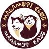 Malamut Club   Катание на собачьих упряжках