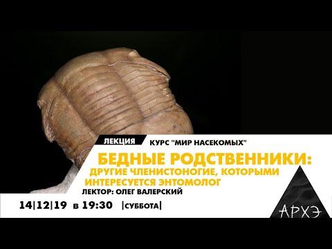Лекция Бедные родственники: другие членистоногие, которыми интересуется энтомолог, Олег Валерский