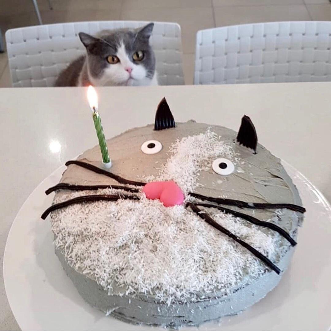 Когда день рождения у вашего питомца?