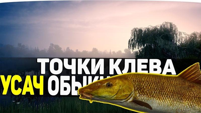 УСАЧ ОБЫКНОВЕННЫЙ ● РОЗЫГРЫШ 100 ТЫСЯЧ СЕРЕБРА ● Русская Рыбалка 4