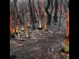 Так возрождается природа после пожара - Идеи для сада | дача | ландшафт| огород