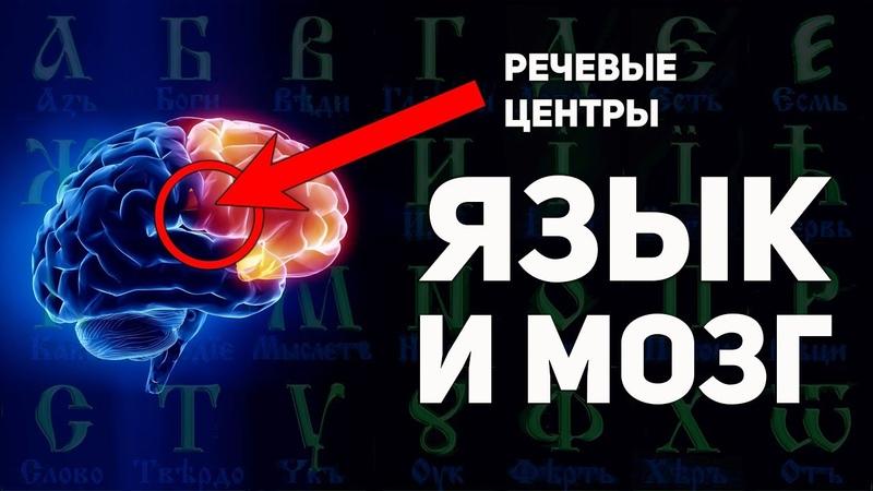 Как буквица раскрывает способности мозга Славянская матрица мировосприятия А Ивашко