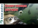 Рецепт теста херабуна. Рыба бросается на крючок сама.