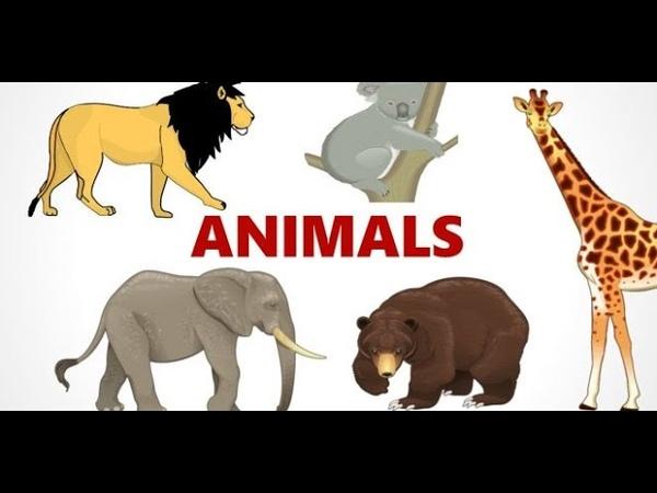 Animals hayvanlaralemivideosu HAYVANLAR BELGESELİ İLGİNÇ VE ÇOK GÜZEL HAYVANLAR ALEMİ VİDEOSU 2020