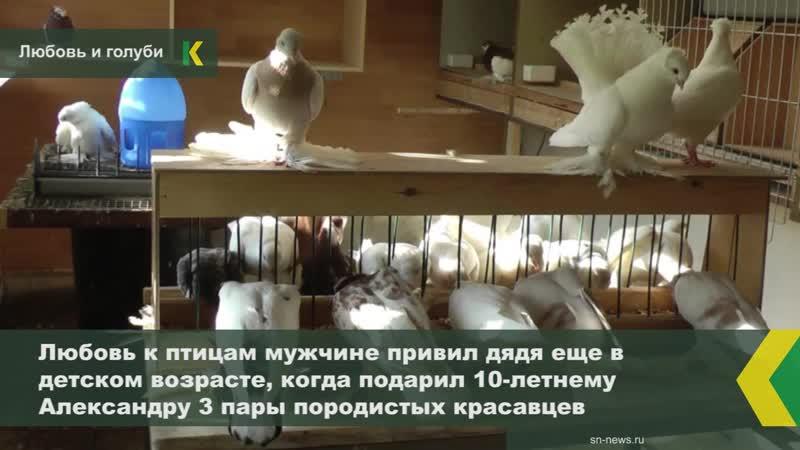 Житель Усть-Лабинска уже 38 лет разводит породистых голубей