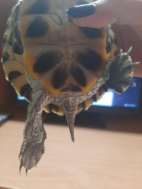 транспортировке, картинки полу лица полу черепаха торт
