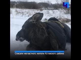 Спасение лося на Волге: сохатый провалился под лед