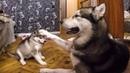 Щенок один дома ВПЕРВЫЕ! СКРЫТАЯ КАМЕРА - щенячий патруль