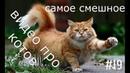 Самое смешное видео про котов. Новые приколы с кошками. Funny cats