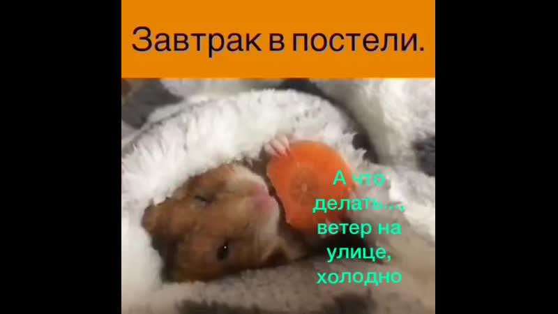 VIDEO 2020 02 09 20 26