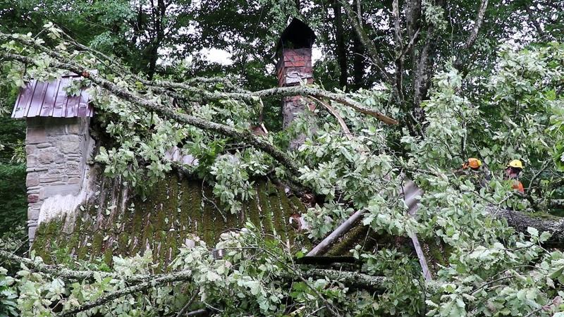 В Сочи упавшее на дом дерево убило человека
