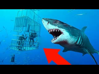 tophype 10 Самых Мощных Акул в Мире