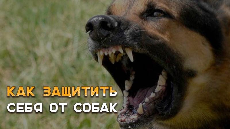 Защита от бродячих собак  Наука Побеждать 