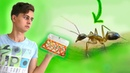 БОЛЬШОЕ ПЕРЕСЕЛЕНИЕ МУРАВЬЁВ В НОВУЮ МУРАВЬИНУЮ ФЕРМУ! Переезд Camponotus maculatus в новый дом!