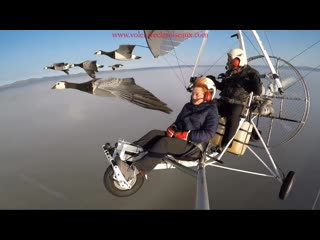 Amazing_flights_with_birds_on_board_of_a_microlight__christi