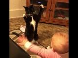 ? ???Детки и кошки! Самое милое видео! Зарядись хорошим настроением!
