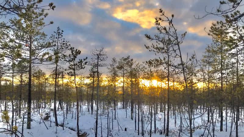 Первый снег под Архангельском ❄️