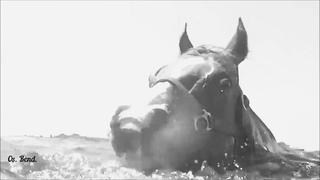 Виктор Берковский - Лошади в океане