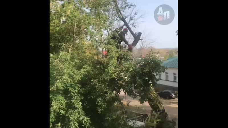 Рекламное агентство пилит здоровые деревья Саранск
