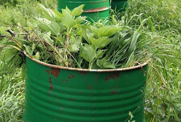 4 вида подкормки для вашего огорода