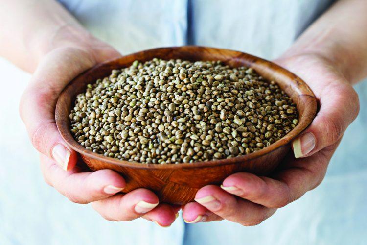 Конопляное семя польза и вред дорогие семена канабиса